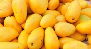 Mango Suppliers at Wholesale Prices