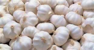 Garlic Suppliers Deal with Premium Quality of Hardneck and Softneck Garlic