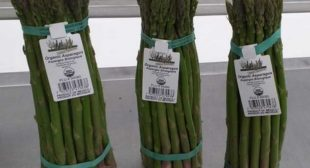Place order for fresh asparagus suppliers at wholesale prices