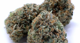 weed for sale uk, Wedding cake weed strain for sale UK