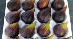 Grow Fig Trees in Container with These Useful Tips