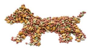 Buy Best Dry Dog Food Online in UK