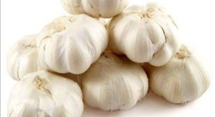 Professional Garlic distributors from online suppliers