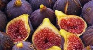 Organic Fig Supplier in Argentina based store