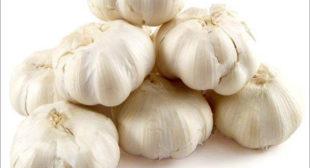 Purchase Organic Garlic from Suppliers to Prepare Garlic Powder & Pickles