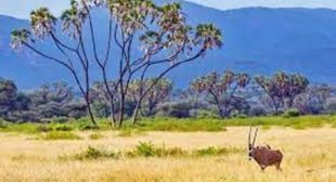 In the tranquillity and into nature indulge in the best game reserves in Africa