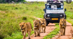 Hop Into The Safari And Get An Exhilarating Experience